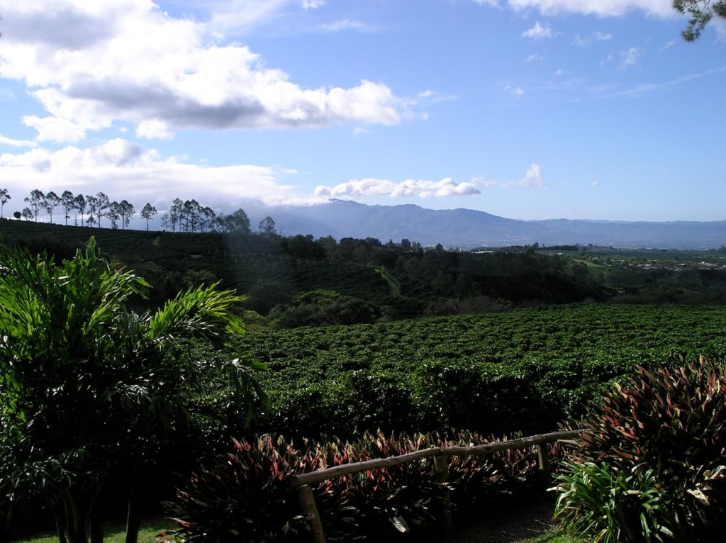 Coffee plantations outside San Jose, Costa Rica