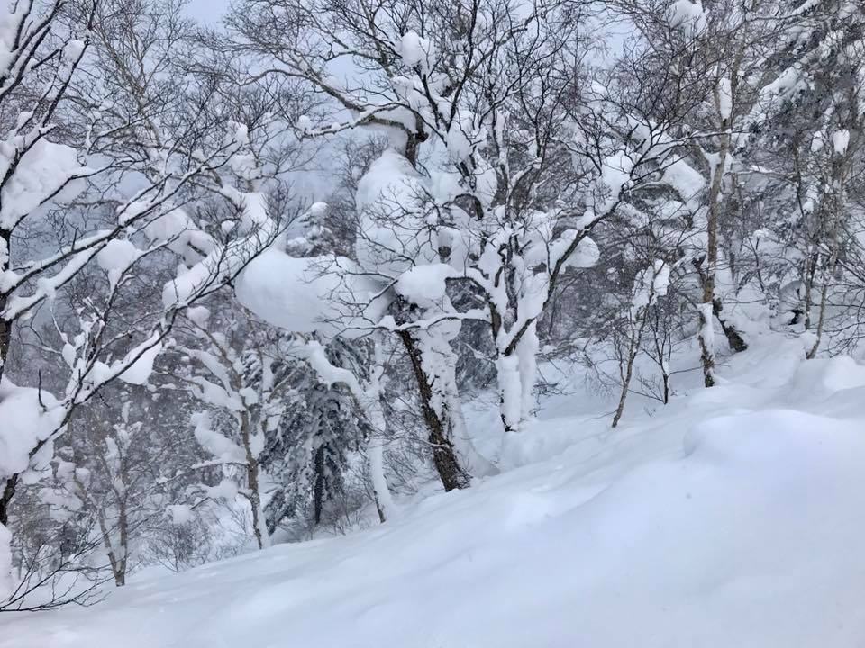 Powder in the trees at Furano