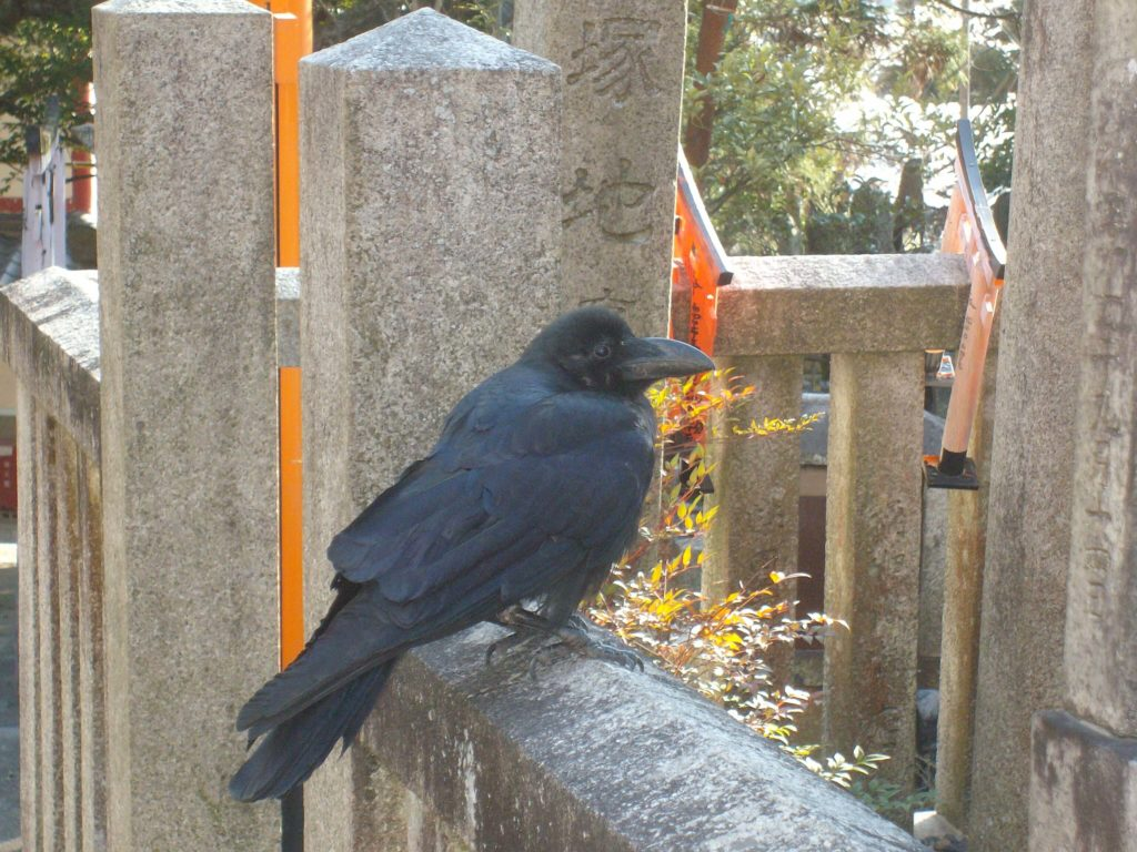 Crow at Fushimi Inari