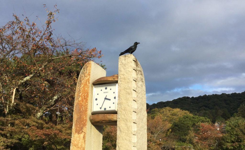Crow at Maruyama Park, Kyoto