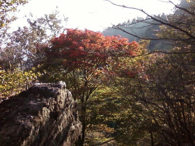 Autumn colours on Mt Atago