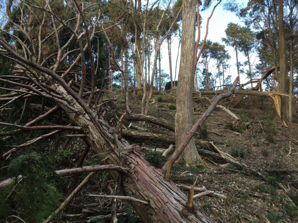 Typhoon damage along the Shogunzuka trail