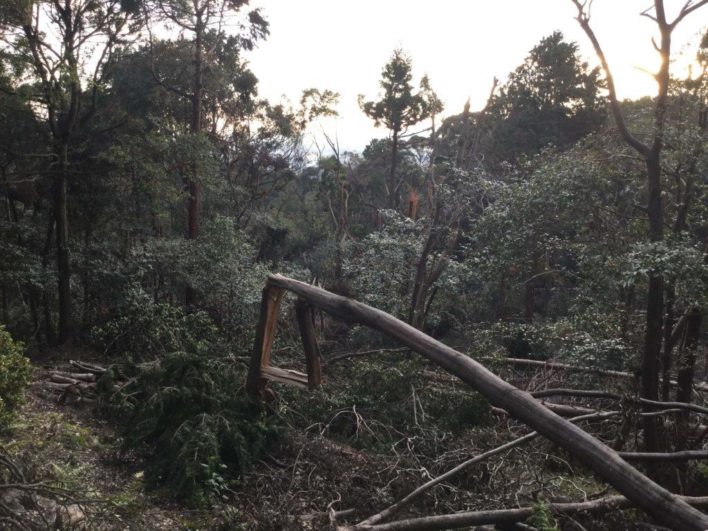 Typhoon damage along the Shogunzuka trail