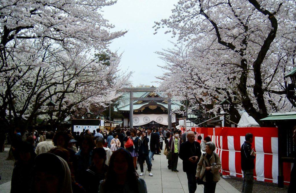 Cherry blossoms at Yasukuni Shrine