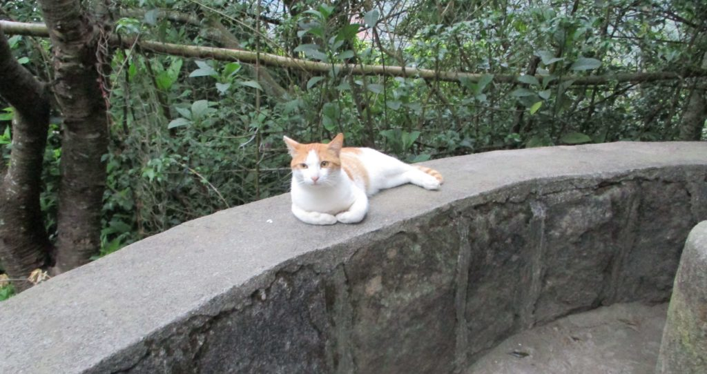 Cat chilling at the top of Zhongyongshan