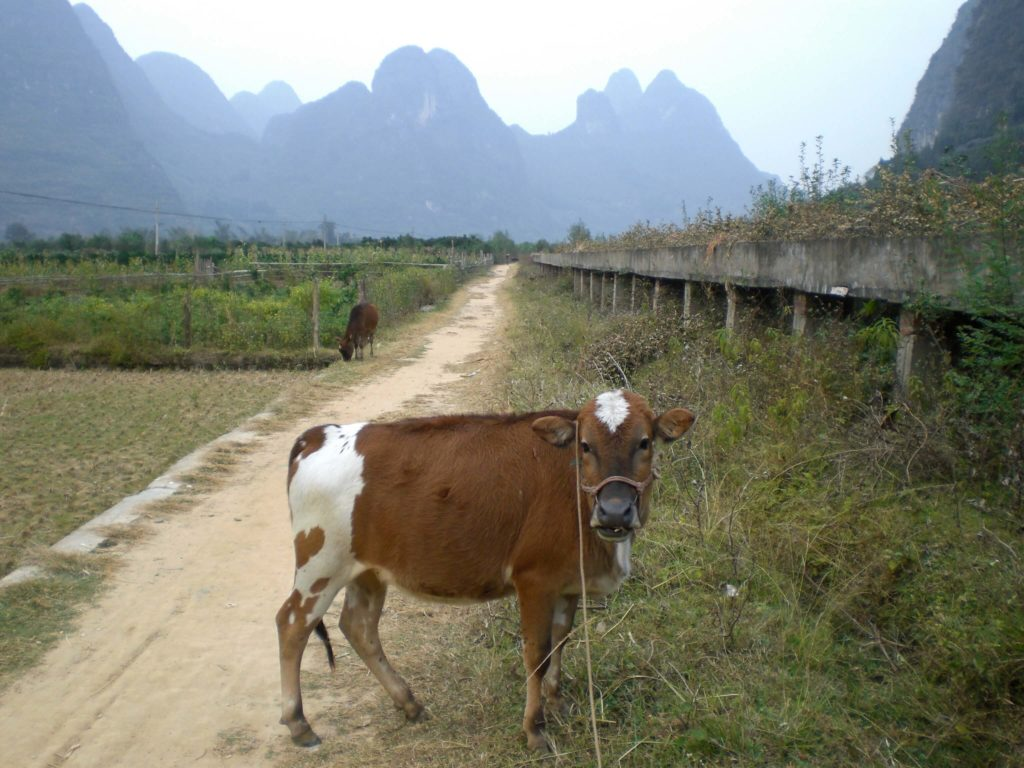 Amazing scenery in Yangshuo