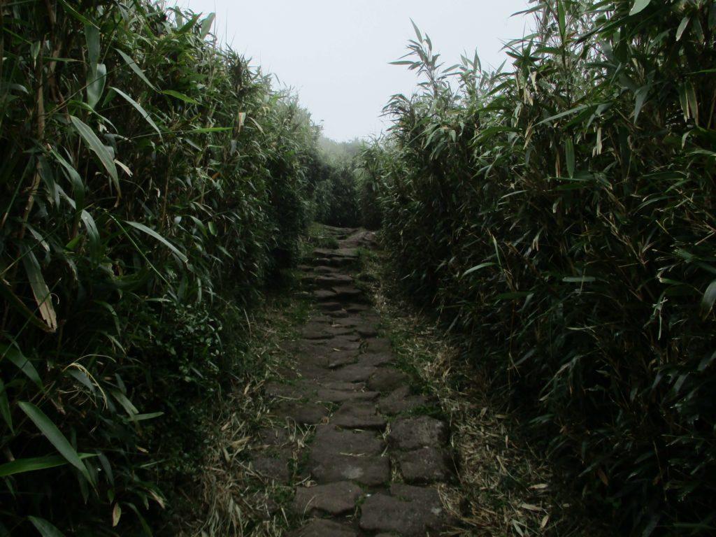 Hiking up Qixingshan in Yangmingshan park