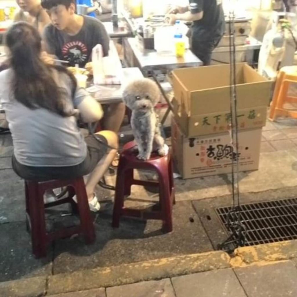 Poodle at Ningxia Night Market