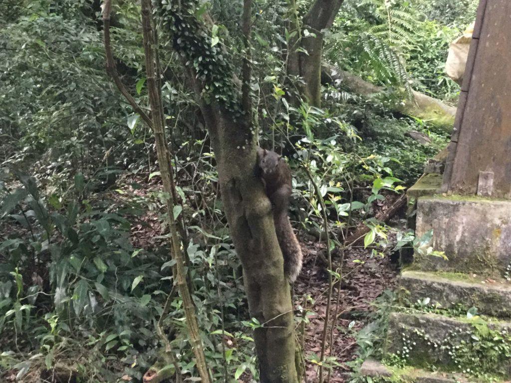 Squirrel in Yangmingshan Park